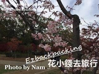 大阪城公園紅葉櫻花