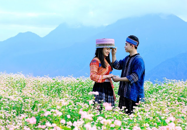 The Buckwheat Flower Festival At Fansipan Peak