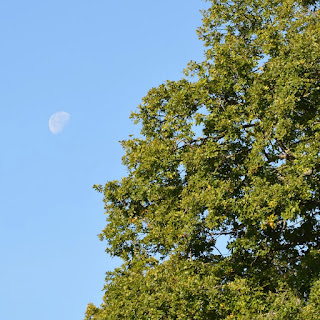 Moon showing the afternoon