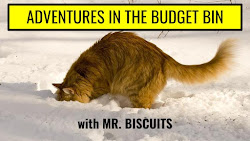 ADVENTURES IN THE BUDGET BIN with Mr. Biscuits