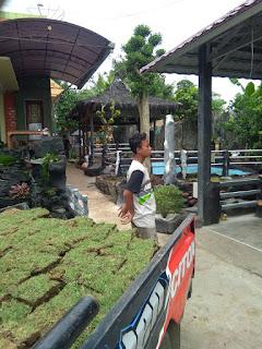 Rumput jepang desa kunir kidul lumajang tahun 2021