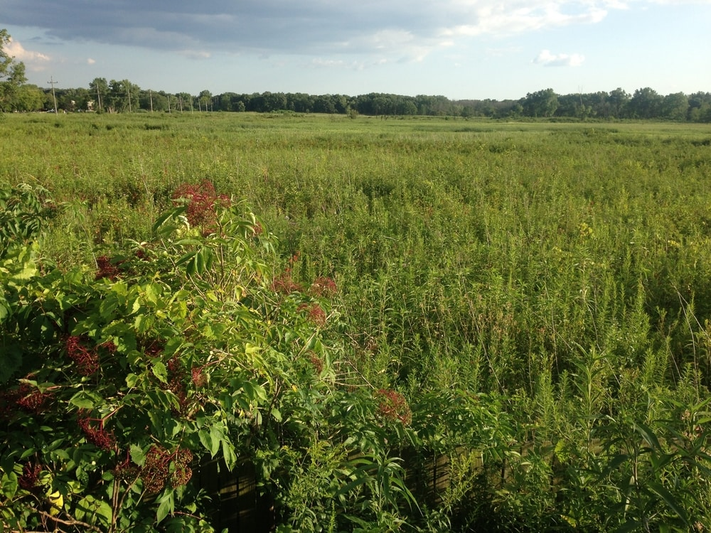 A view of Wolf Road Prairie, looking down from a platform. It looks predominantly green.