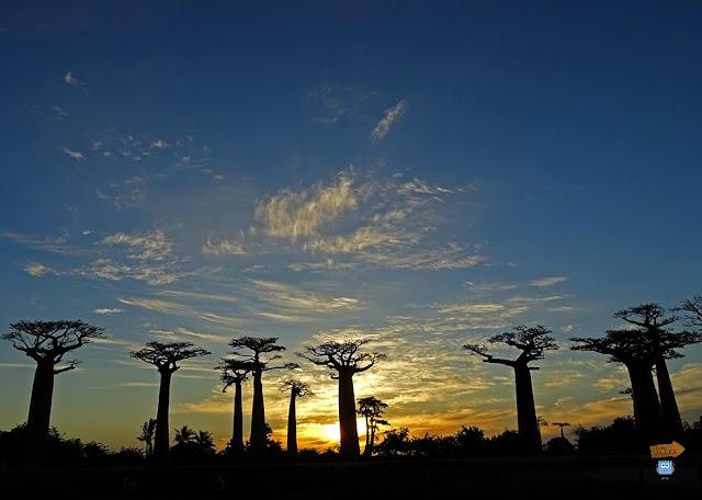 Madagascar: Allèe de Baobab