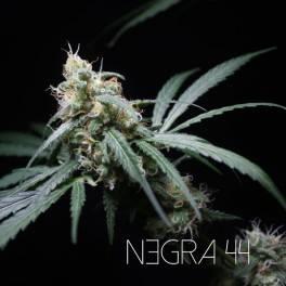 Negra44 R-Kiem