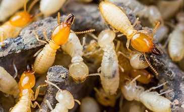 Inilah Serangga Paling Menyebalkan Yang Ada di Sekitar Kita