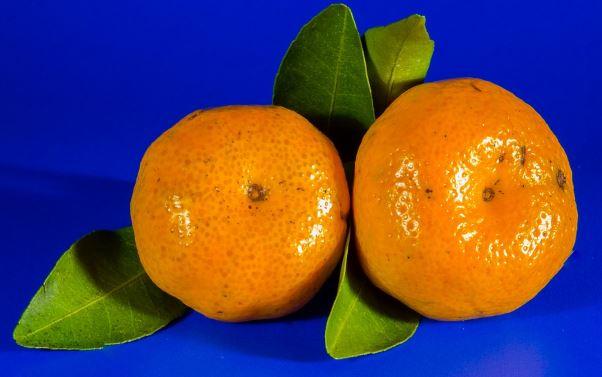 Tangerina (mexerica), fruta reforça a resistência imunológica
