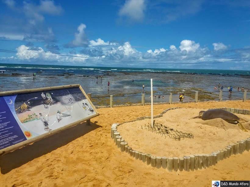 Projeto Tamar - Praia do Forte (Bahia)