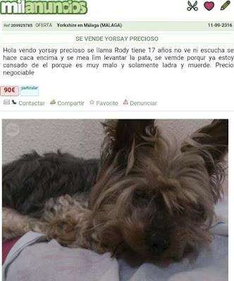 El anuncio de venta de un perro más lamentable que hemos visto nunca