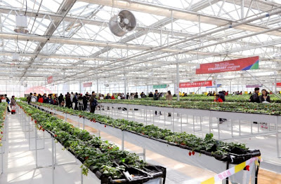 Modern glasshouse production