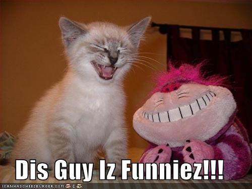 Funny Kittens With Captions Images