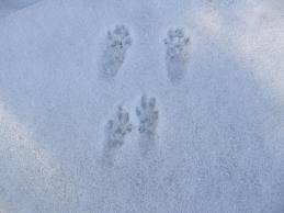 Cottage Country Pest Control Animal Tracks