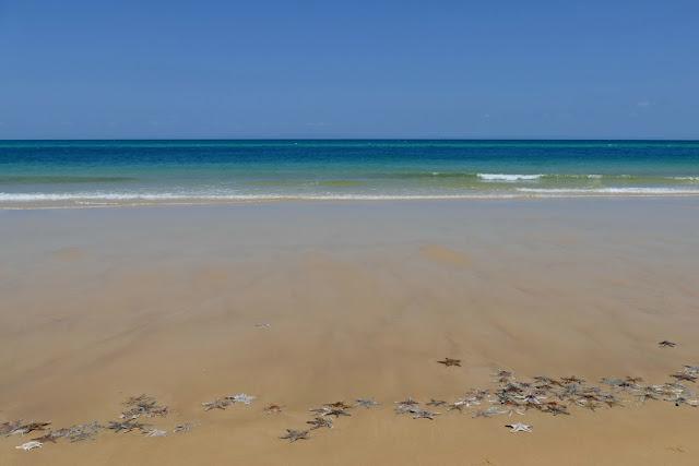 Seesterne Strand Meer Moreton Island Insel