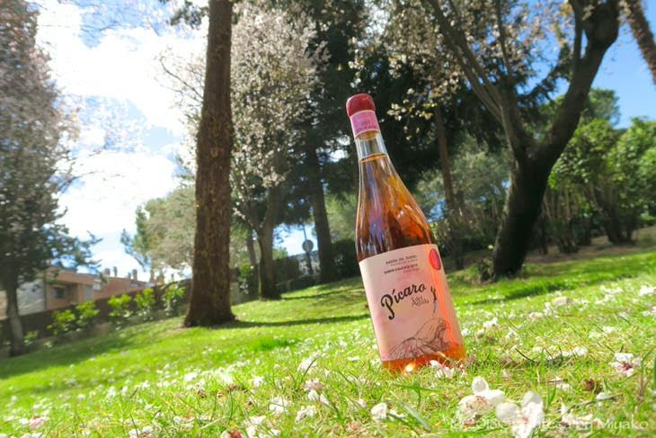 スペインのロゼワインと桜の木 Picaro del Aguila Clarete