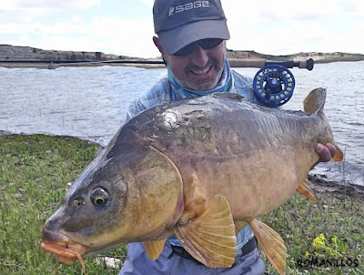 fly fishing for carp