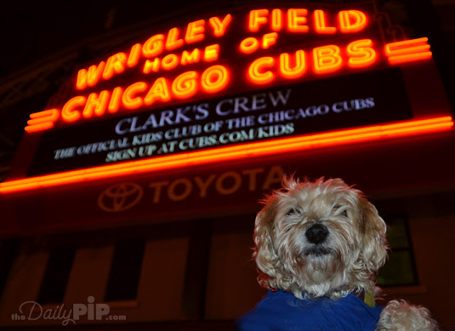 Ruby stands outside Wrigley Field during the 2016 World Series