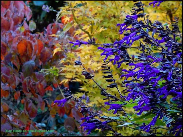 Un giardino di perenni in ticino autunno colorato