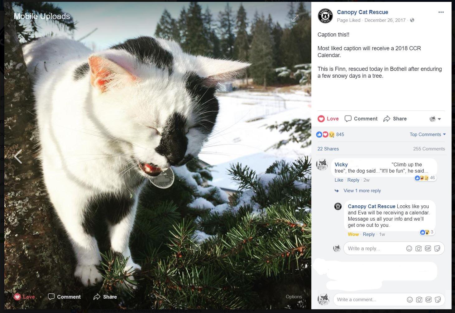 Screen ... & Eastside Cats: 2018 Calendars: Canopy Cat Rescue