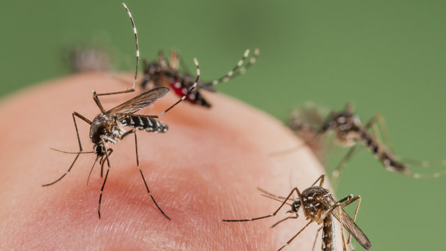 People With No Symptoms of Zika Can Still Spread It Sexually