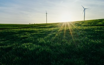 Wallpaper: Wind Turbines on Green Landscape