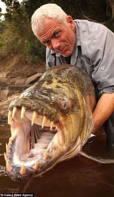 Ikan air tawar raksasa