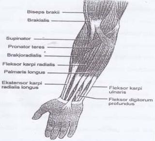 Contoh Latihan Penguatan Otot Lengan