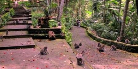 Monkey Forest Bali (wanara wana)