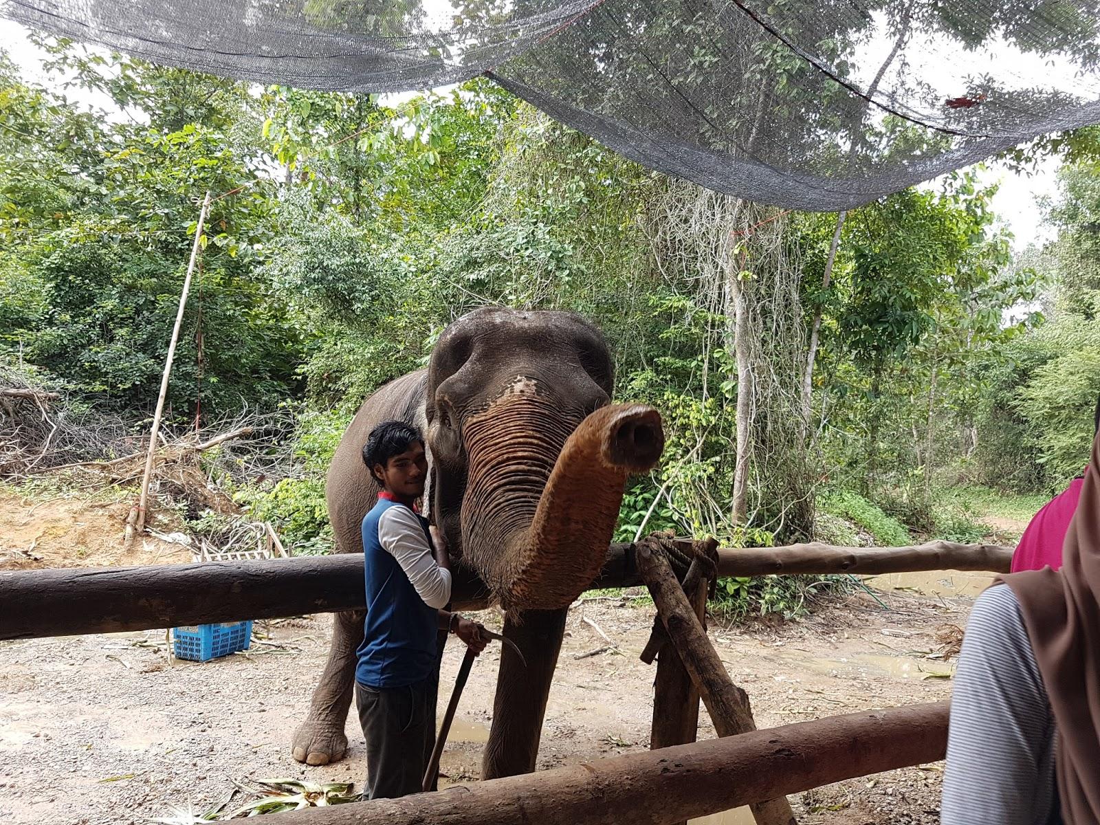 Trip Phuket Krabi Elephant Tracking Dan Hatyai Floating Market