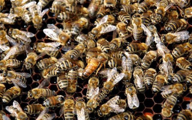 Νεκρός 32χρονος στα Τρίκαλα από τσίμπημα μέλισσας