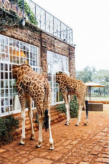 Giraffe Manor in Nairobi, Kenya