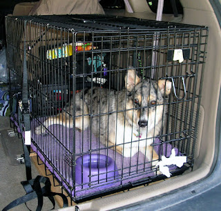 Dog Crates And Cages
