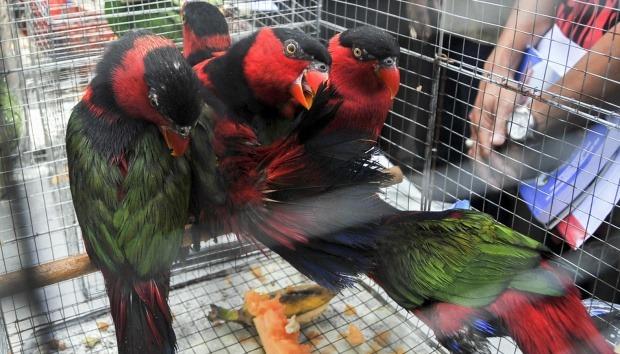 Polisi amankan 106 burung asal Papua di Pelabuhan Tanjung Perak