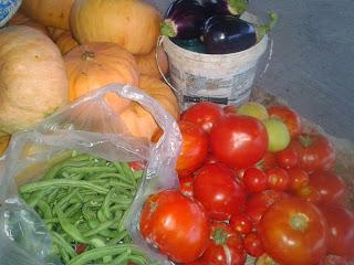 Λούφα, το σφουγγάρι της στεριάς: Καλλιέργεια