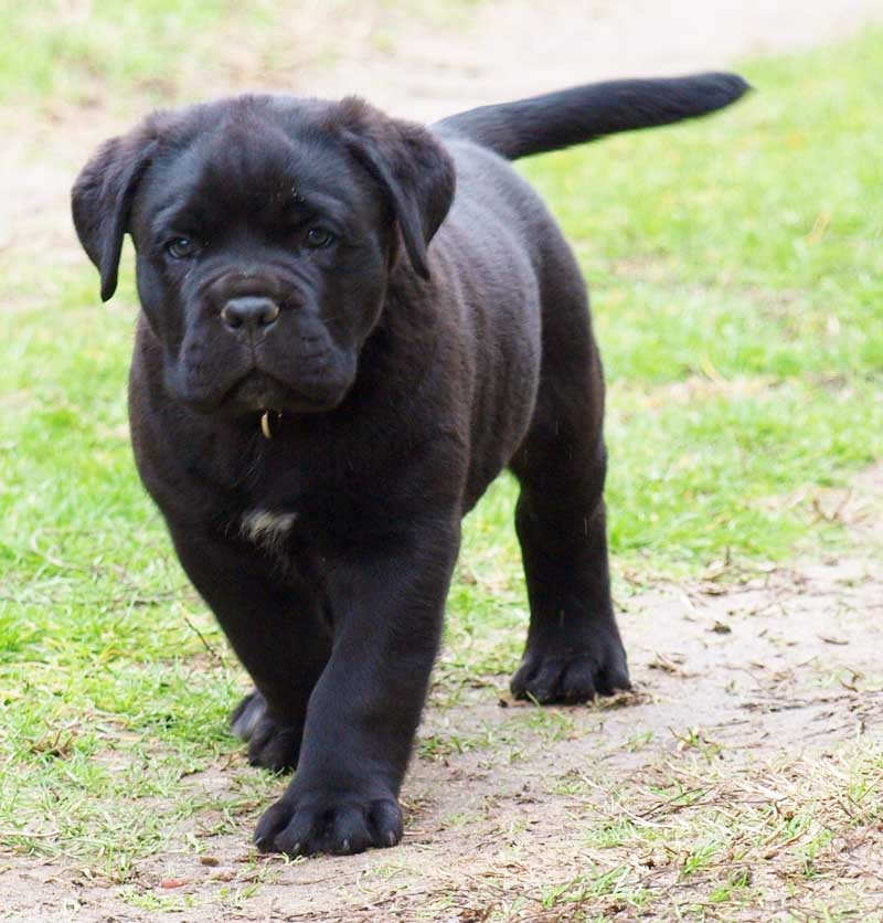 Puppies Pictures and Information