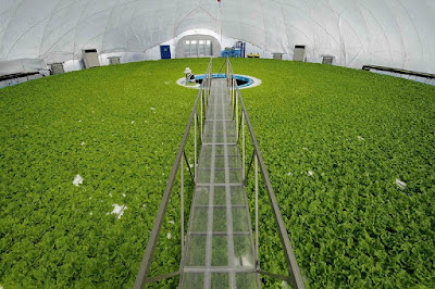 Salad new inventions in agriculture