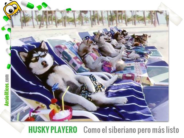 Chiste de Perros: Huskies de Vacaciones