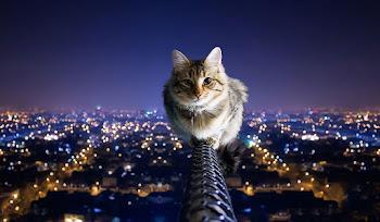 69 HD Kedi Facebook Kapak Fotoğrafı