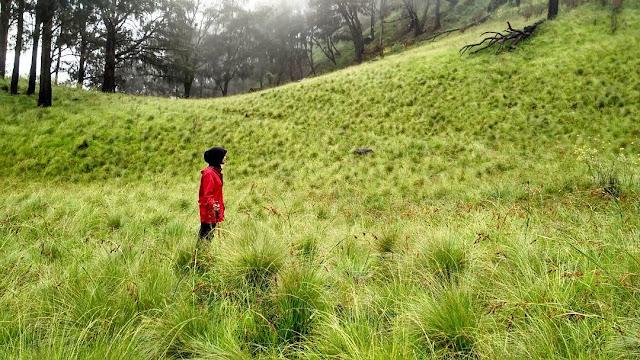 foto savana rumput gunung lawu via candi cheto