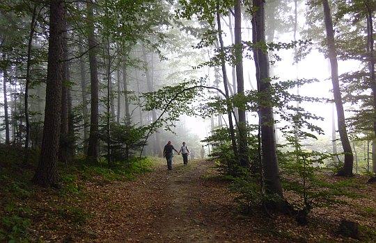 Bukowy las.