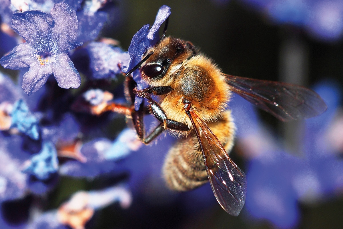 Bees Were Declared As The Most Important Living Beings On Earth