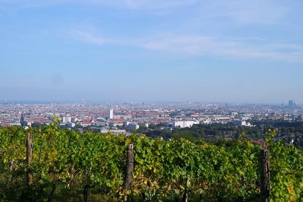 vienne vienna ottakring vignes panorama Wilhelminenberg château 16 arrondissement