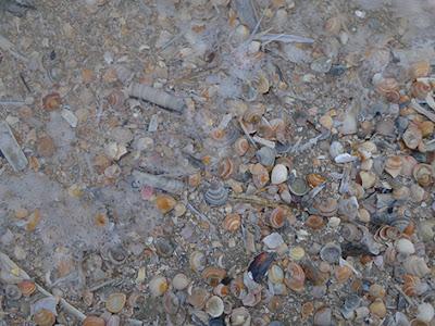 skaller på stranden