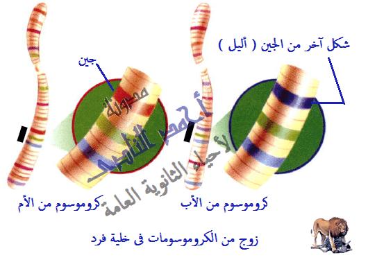 الجينوم البشرى GENOME   -  الحمض النووى DNA – الكروموسومات- الجينات -  أحياء الثانوية العامة – مدونة أحمد النادى