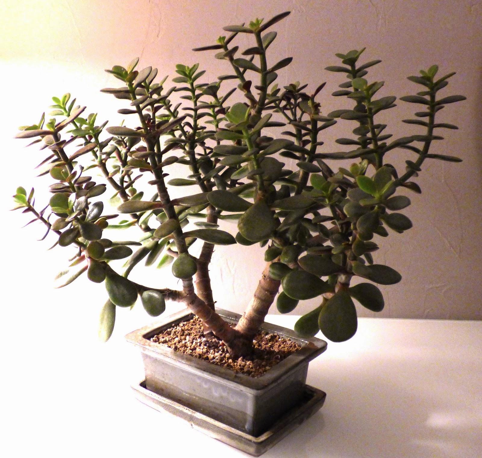 une semaine paris for t la main verte multiplier les succulentes. Black Bedroom Furniture Sets. Home Design Ideas