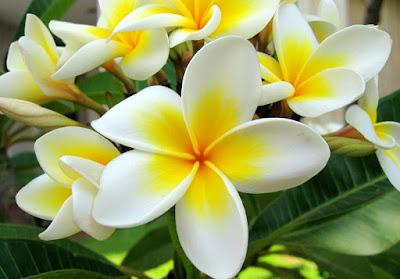 bunga lengkap dan tidak lengkap beserta contohnya, bunga sempurna dan tidak sempurna beserta contohnya, pembuahan pada tumbuhan berbiji terbuka, penyerbukan berdasarkan perantaranya,