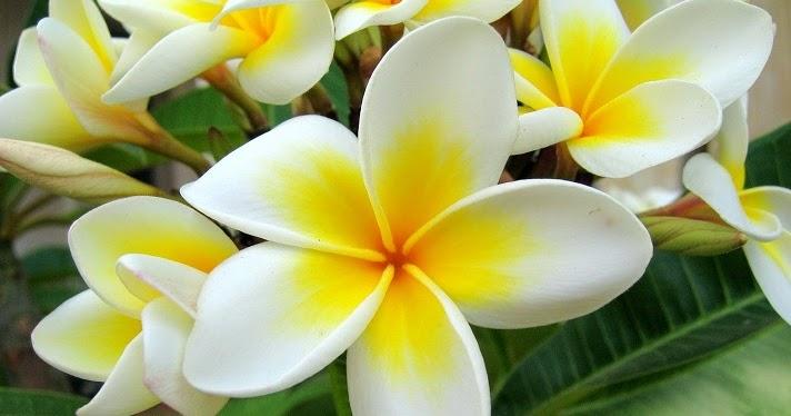 Pengertian Bunga Sempurna Dan Tidak Sempurna Beserta Contohnya