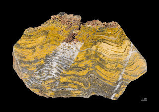 Evolutionists are debunking their own origin of life conjectures for us. In this case, stromatolites are fouling up their timeline again.