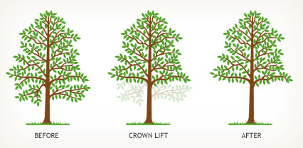 Crown Lifting