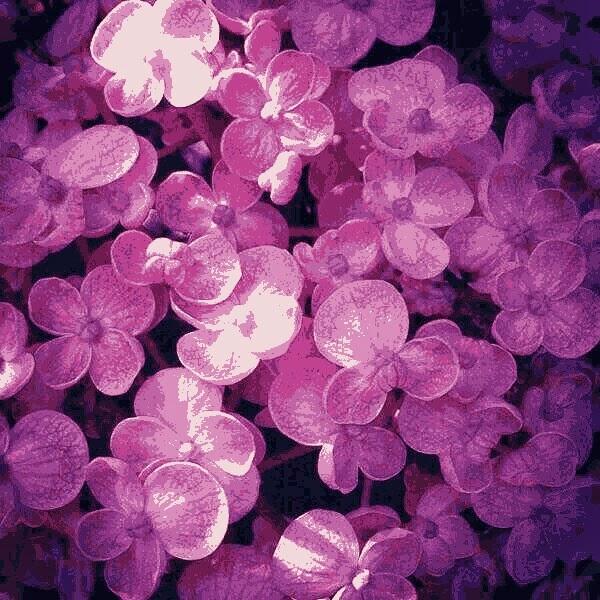 Violetas para Cosas Que Siento