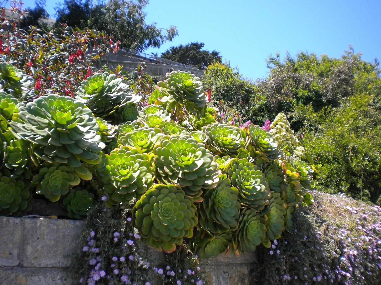 alcatraz the rock prison island vankilasaari san francisco matkailu matkajuttu mallaspulla kaktus
