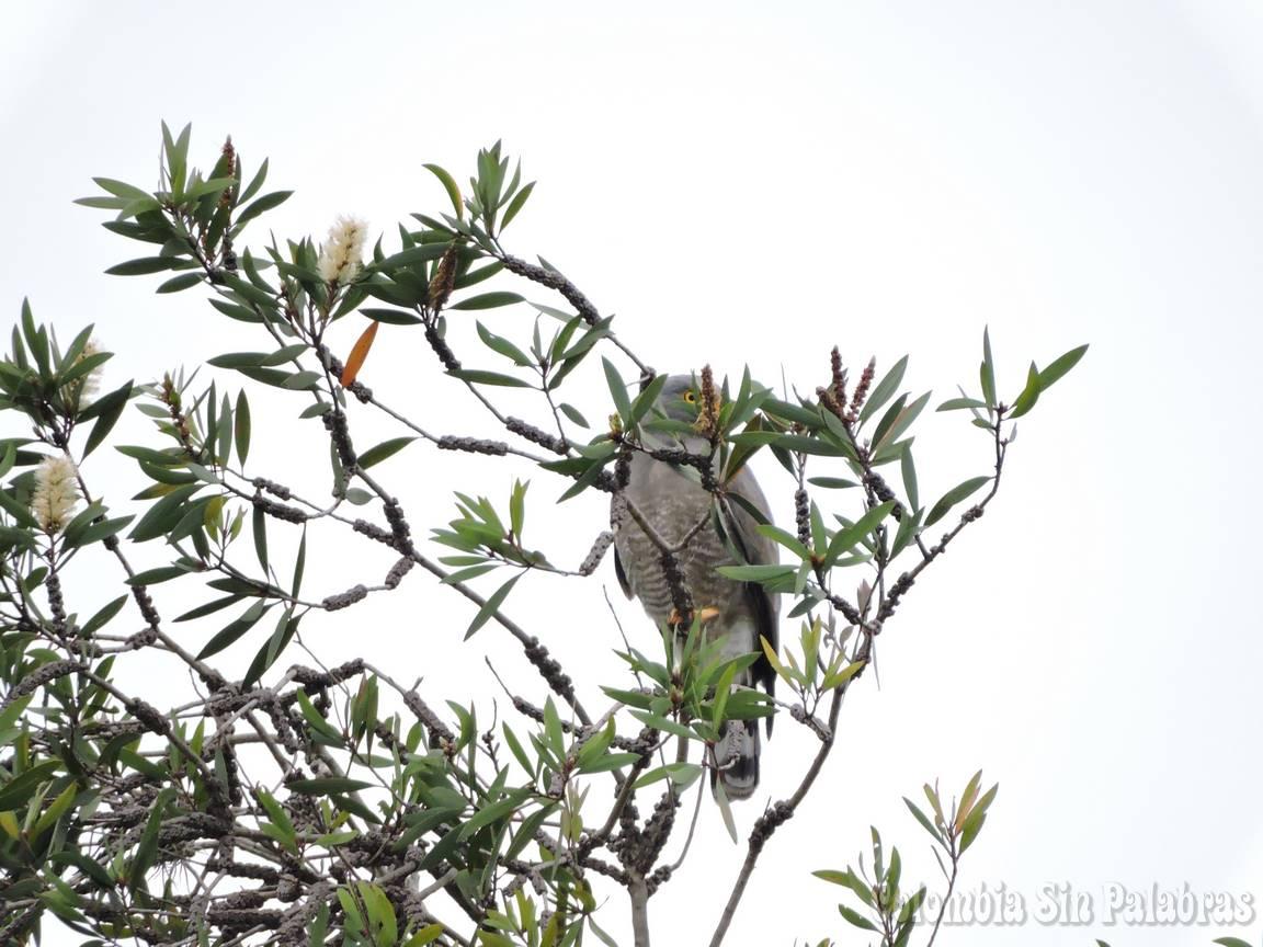 ave en el cerro quitasol